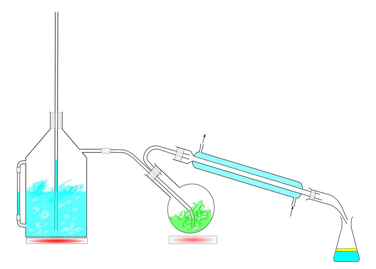 Wasserdampfdestillation - ätherische Öle selber herstellen